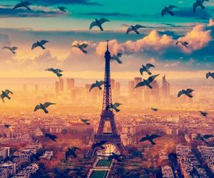 paris, bird, and wallpaper image