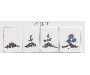 patience, flowers, and plants image