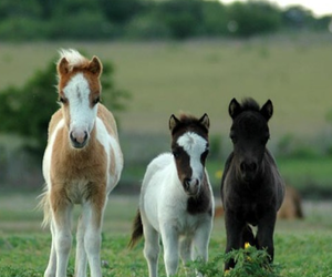 horse, pony, and animal image