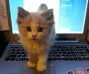 adorable, animal, and cat image