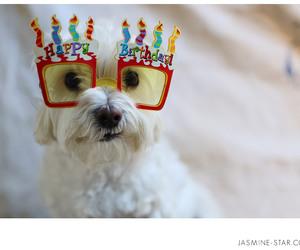 adorable, baby, and dog image