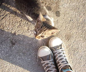 all, animal, and cat image