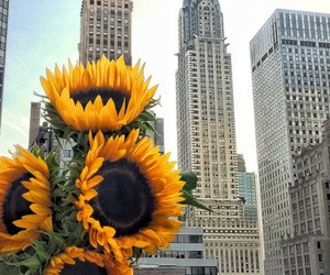city, flowers, and sunflower image