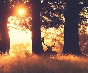 sun, tree, and deer image