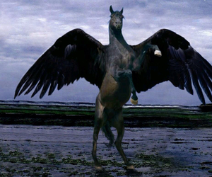 horse and wings image