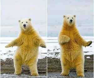 bear, funny, and dance image