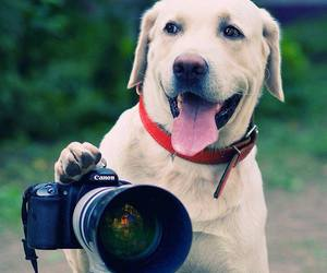 dog, cute, and photo image