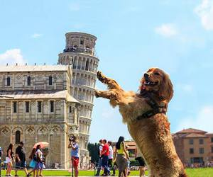 dog, funny, and italy image