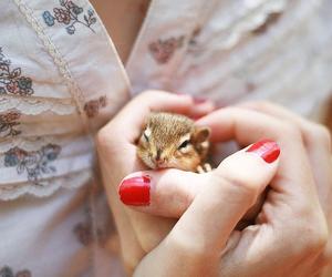 cute, animal, and nails image