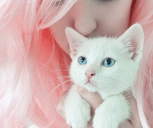 beautiful, cat, and fashion image