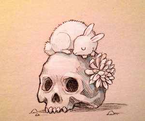 skull, Chiara Bautista, and rabbit image