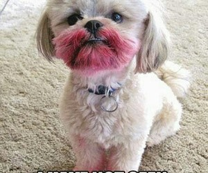 dog, funny, and lipstick image