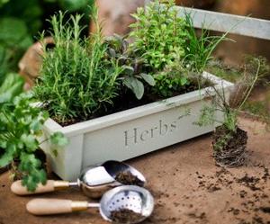 garden, gardening, and rosemary image