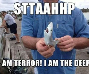baby animals, funny, and sharks image