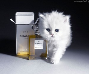 chanel and cat image