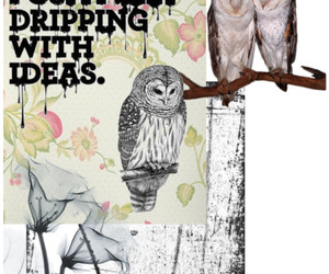 owls, Polyvore, and owl image