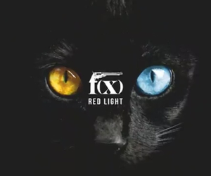 amber, cat, and fx image