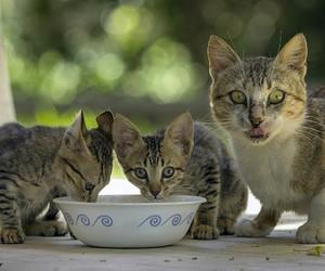 cat, kawaii, and cute image