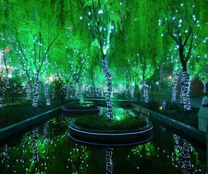 green, light, and tree image