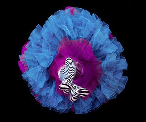 legs, blue, and flower image