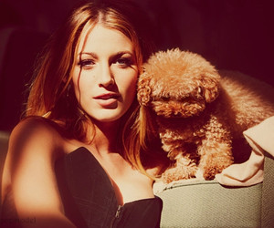 blake lively, dog, and gossip girl image