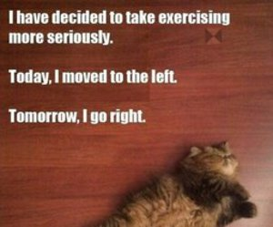cat, funny, and exercise image