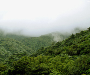 clouds, rain forest, and mountain image