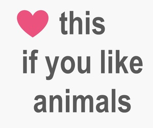 adorable, amazing, and animal image