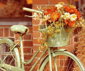 bicycle, flowers, and vintage image