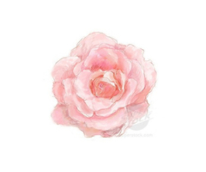 flower, pink, and transparent image