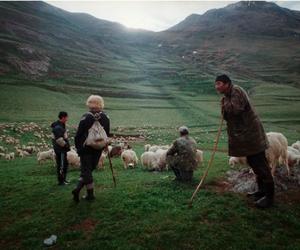 :), sheep, and shepherds image