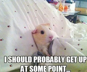 funny and hamster image