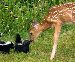 fawn skunks nature image
