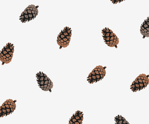 cone, pattern, and nature image