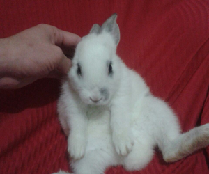 bunny, lovely, and cute image