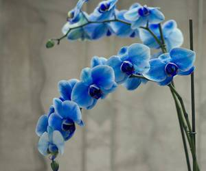 blue, flower, and orchid image