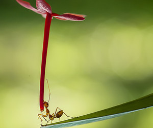 ant, bug, and insect image
