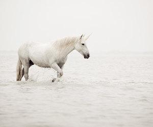 unicorn, white, and sea image