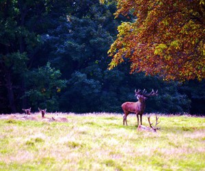 autumn, colors, and deer image