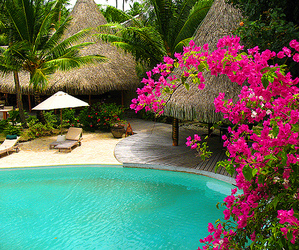 pool, flowers, and summer image