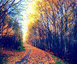 autumn, forest, and indie image