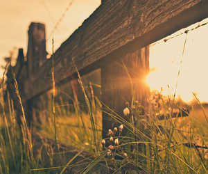 country, flowers, and fence image