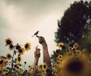 bird and sunflowers image