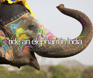 elephant, india, and animal image