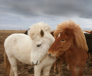 animal, horse, and puppy image
