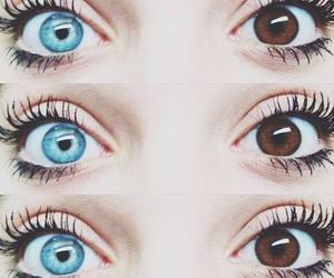 eyes, blue, and brown image