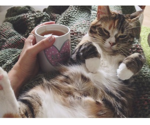 cat, cozy, and Lazy image