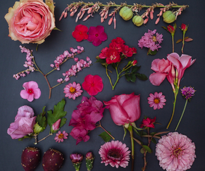 flowers, organization, and pink image