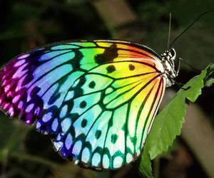 butterfly and colours image