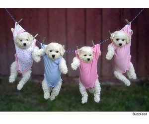 puppys and cute image